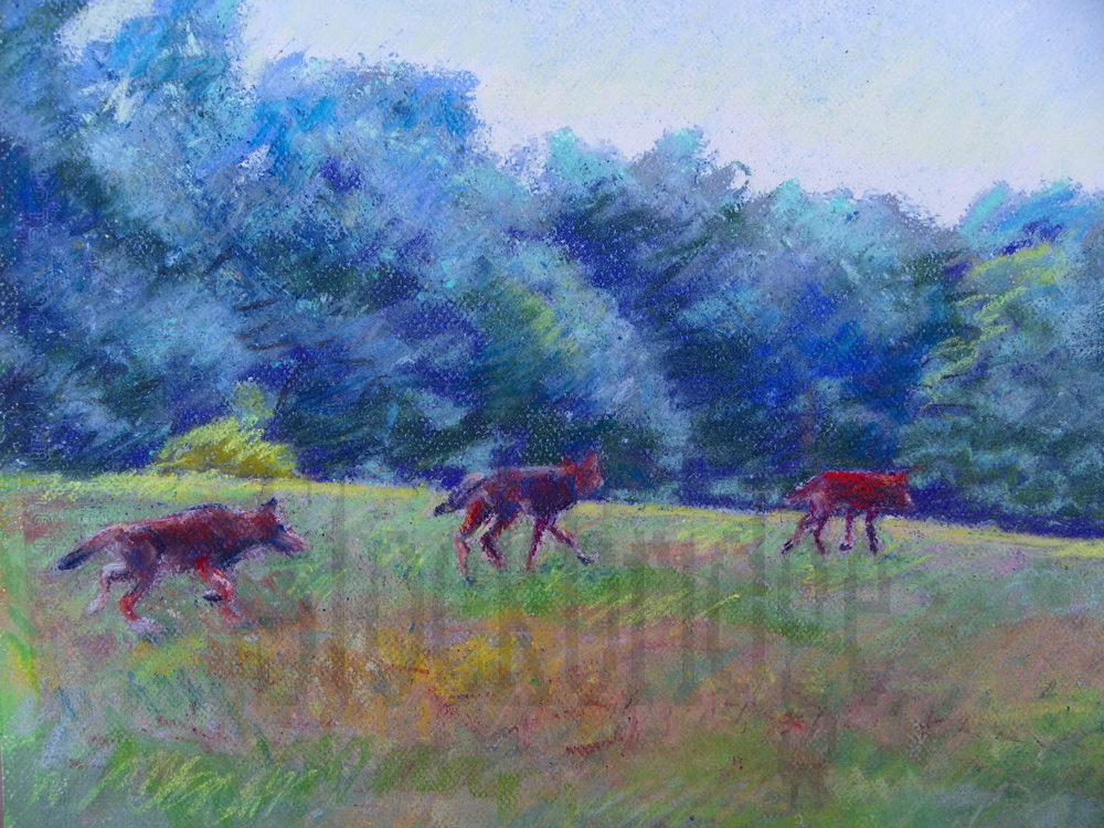 coyotes in pastel by Stockbridge